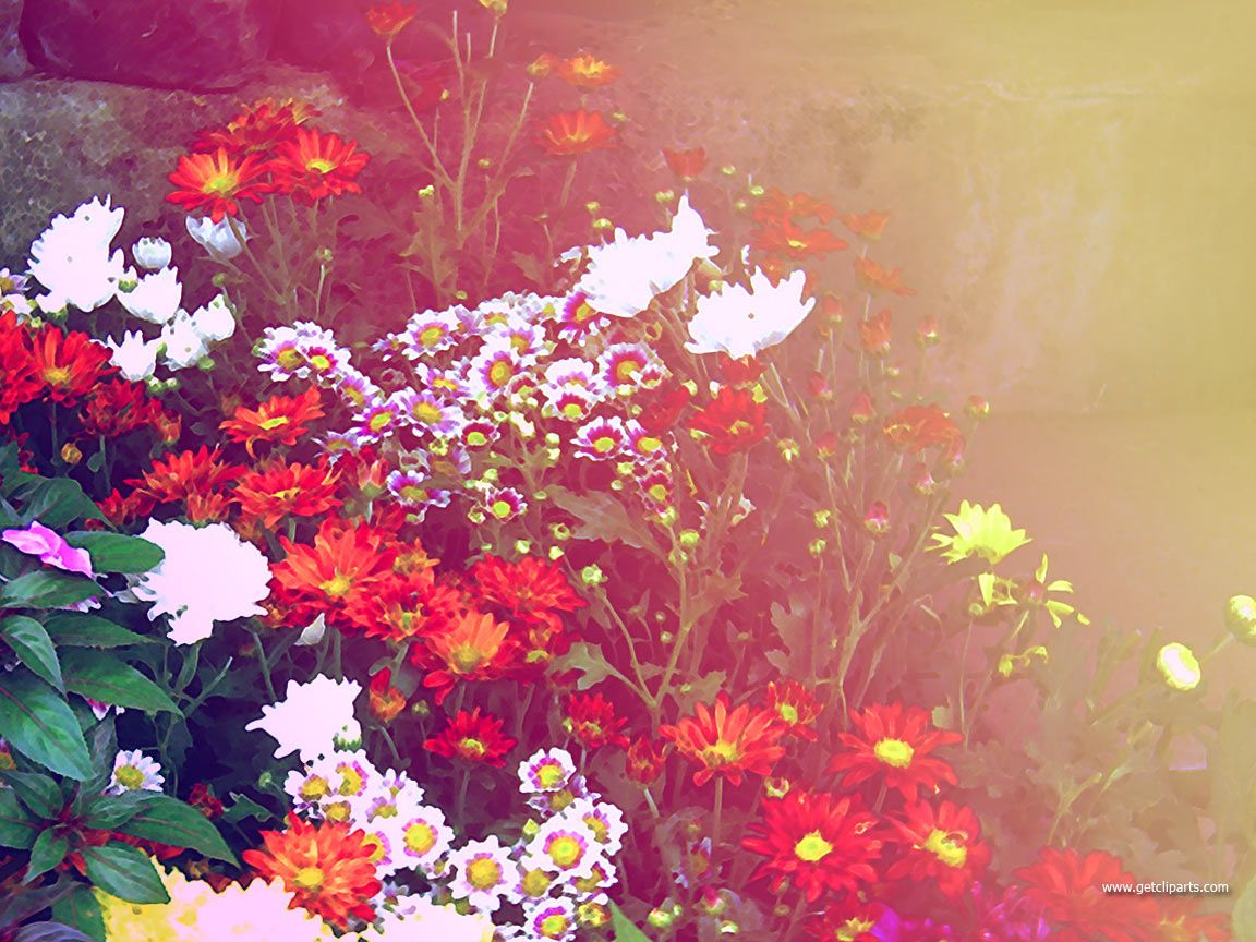 The colors that nature has painted the flowers with are equally