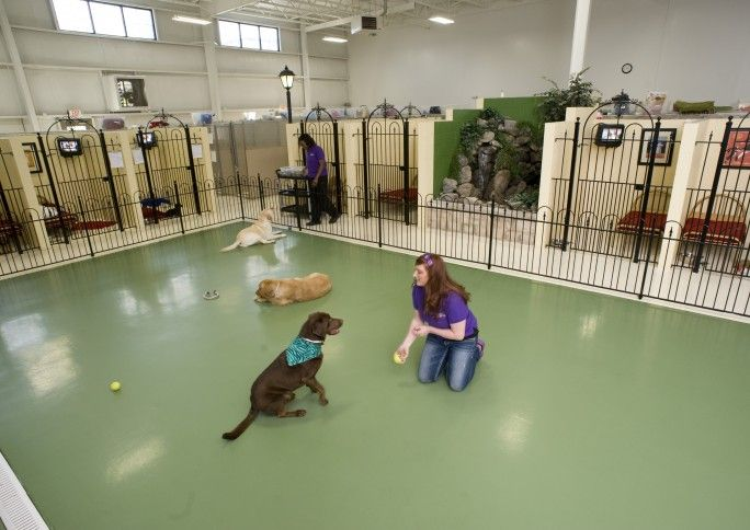 Take A Tour Of The Pet Palace Resorts Dog Kennels In Columbus