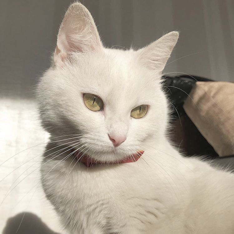 Lequel Preferez Vous Which One Do You Prefer Dog Cat White Cuteanimals Respect In 2020 Cats Pretty Cats Cat Aesthetic