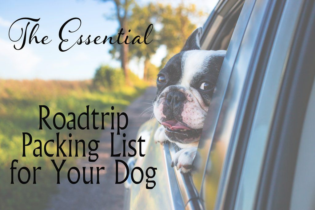 The Essential Road Trip Packing List For Your Dog Dog Training