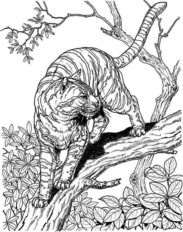 Tiger A Tiger Liked Wild Cat In The Wild Coloring Page With