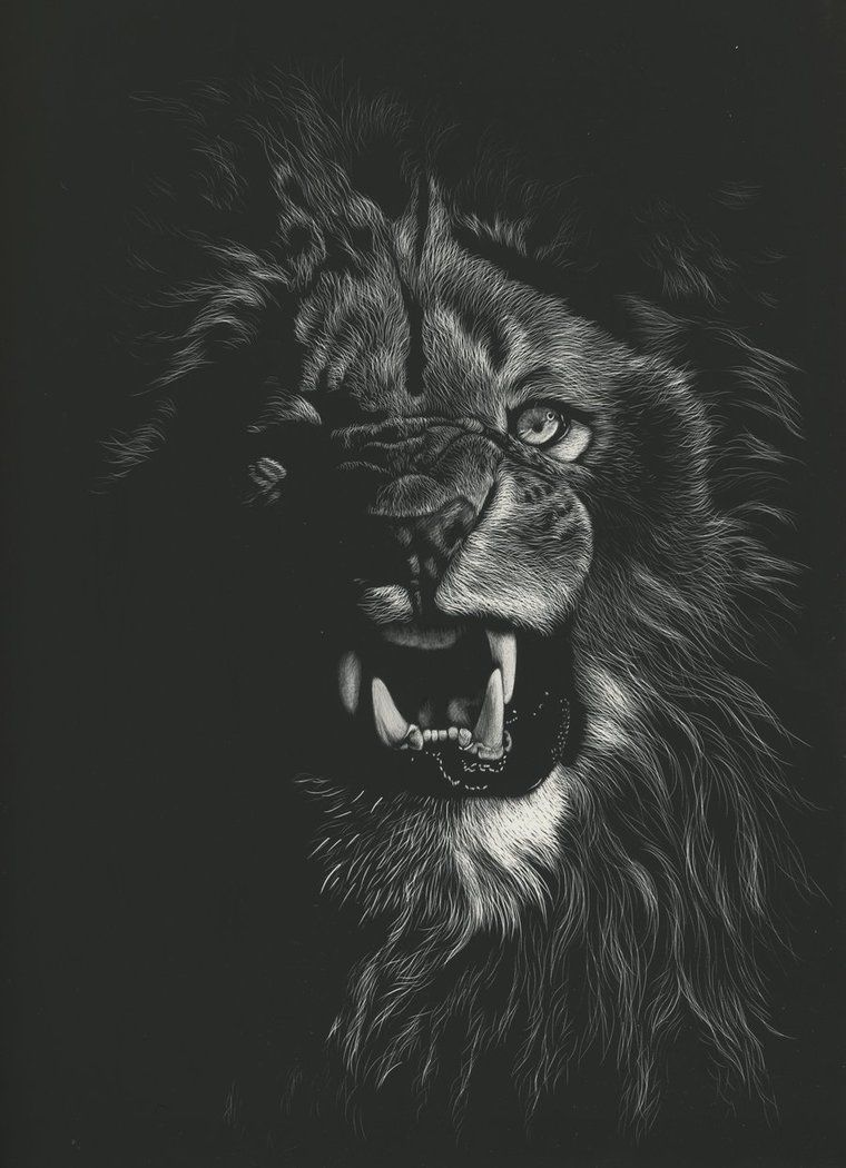 Day 152 Of My 2016 A Drawing Every Day Resolution By Shonechacko In 2021 Lion Wallpaper Black And White Lion Animal Wallpaper