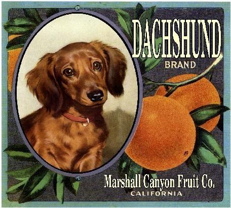 Marshall Canyon Dachshund Dog Orange Citrus Crate Label Art Print