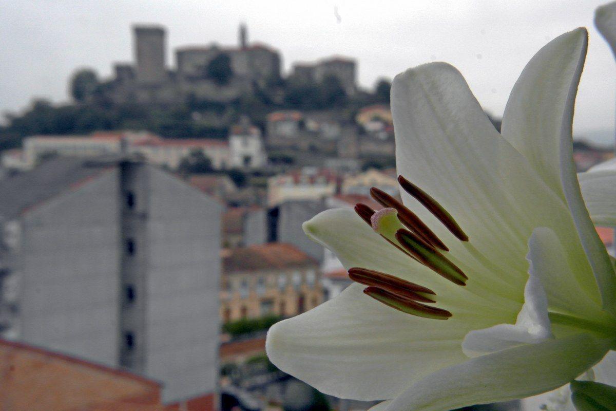 El Castillo de San Vicente en Monforte ni con esta hermosa flor queda eclipsado.