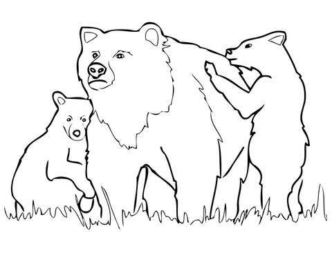 Outline of Grizzly Bear Yahoo