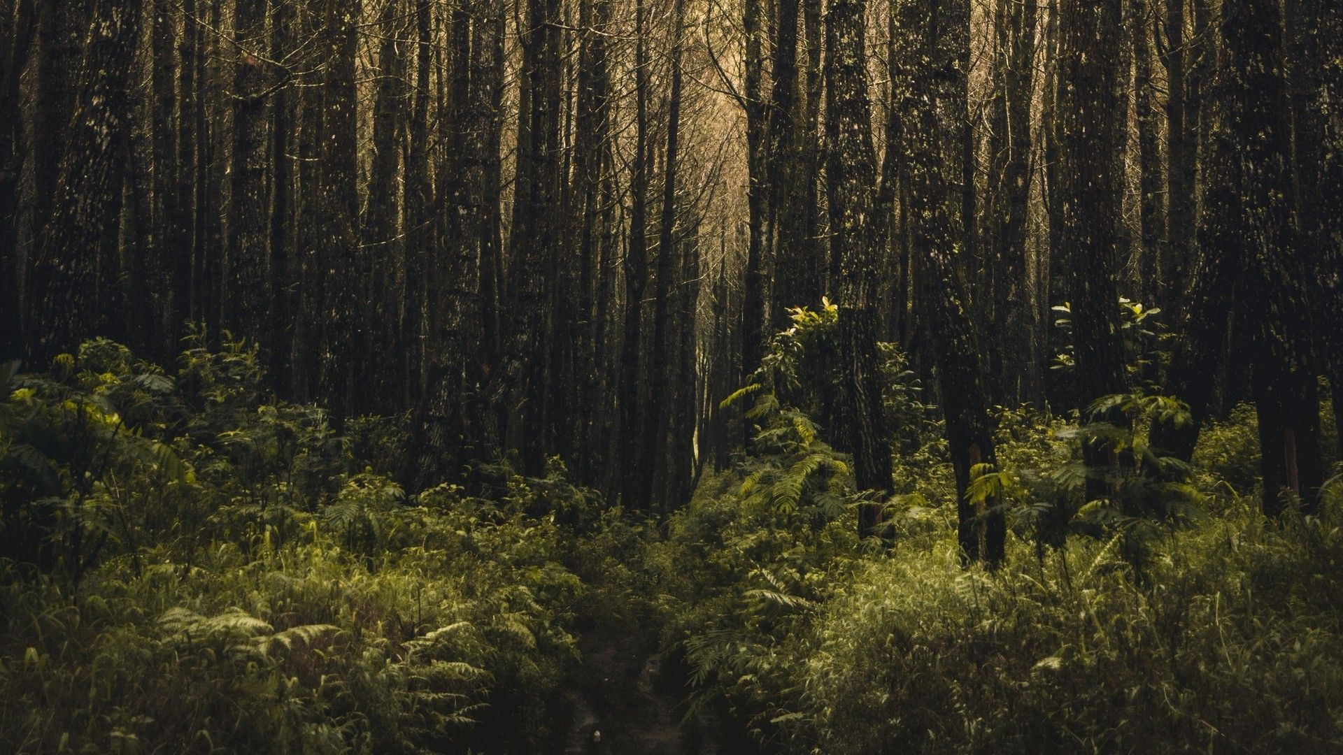 Scary Forest Wallpapers 65 Best Free Scary Forest Hd Wallpaper For Laptop In 2020 Forest Wallpaper Tree Hd Wallpaper Hd Wallpapers For Laptop