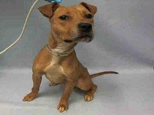 Azula A1062250 Animal Lover Dog Adoption Baby Dogs