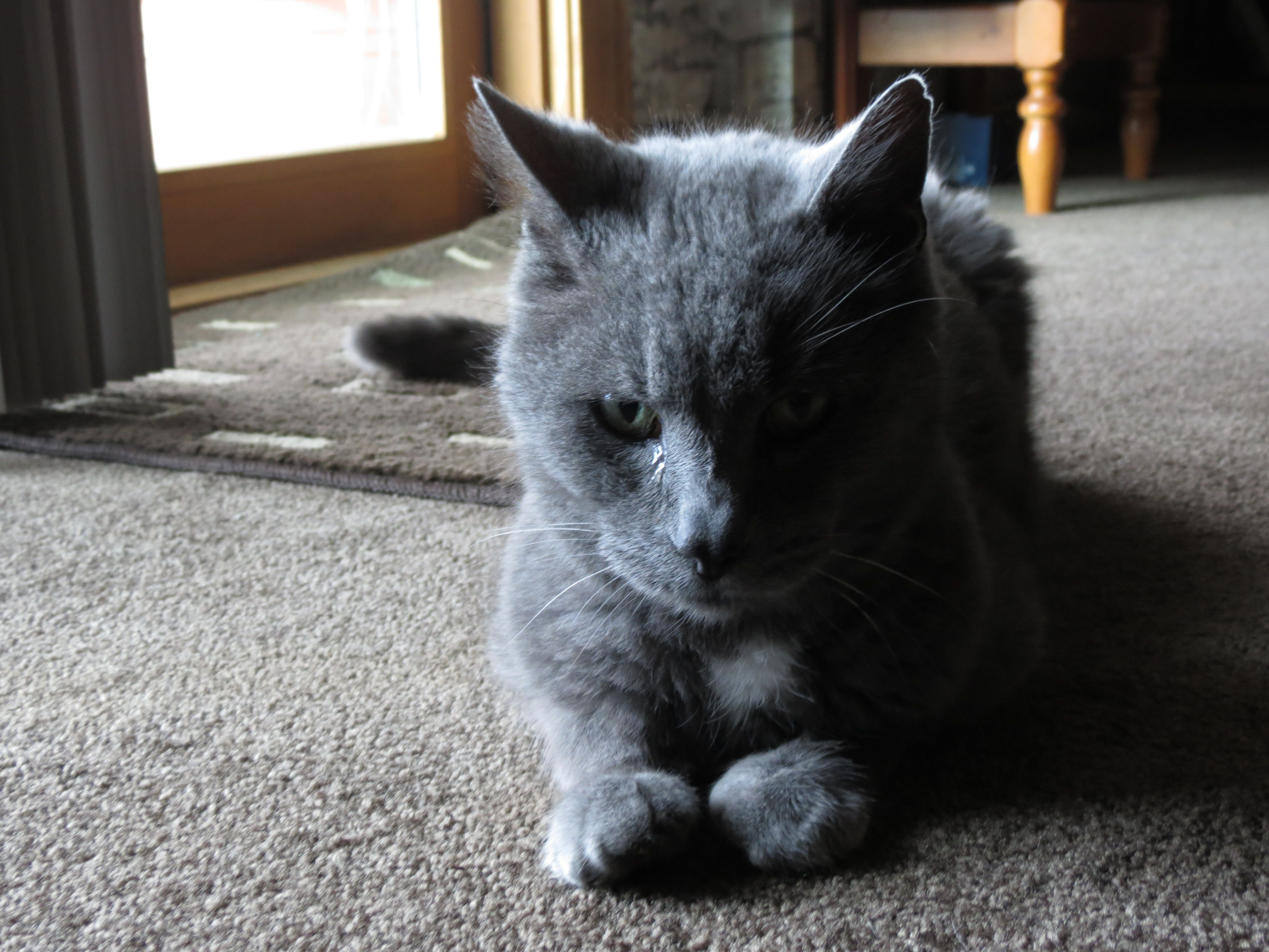 Kittyyyyyyy<3