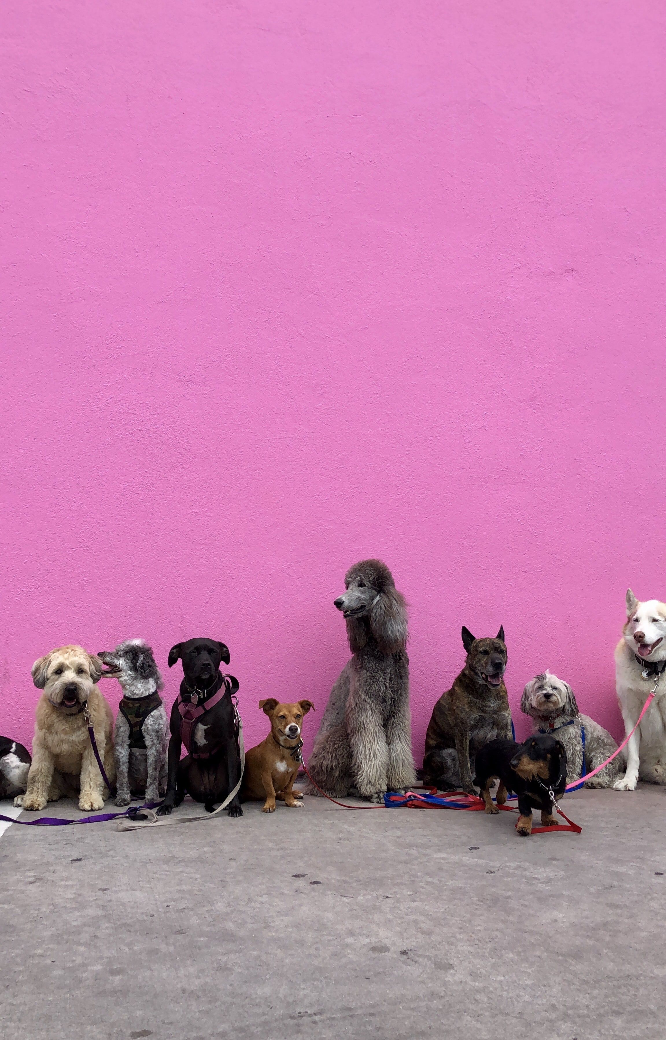 Litter Of Dogs Fall In Line Beside Wall Therapy Dogs Healthy Pets Pet Insurance Cost