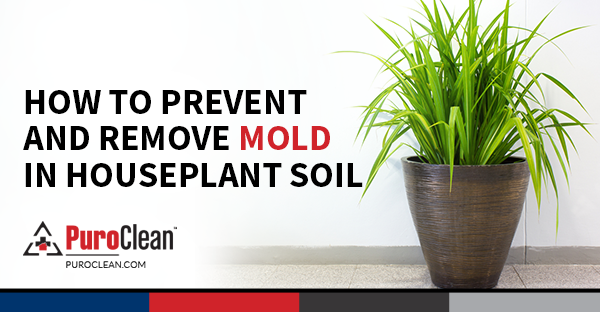 How To Prevent Get Rid Of Mold In Houseplant Soil Mold Remover House Plants Mold Prevention