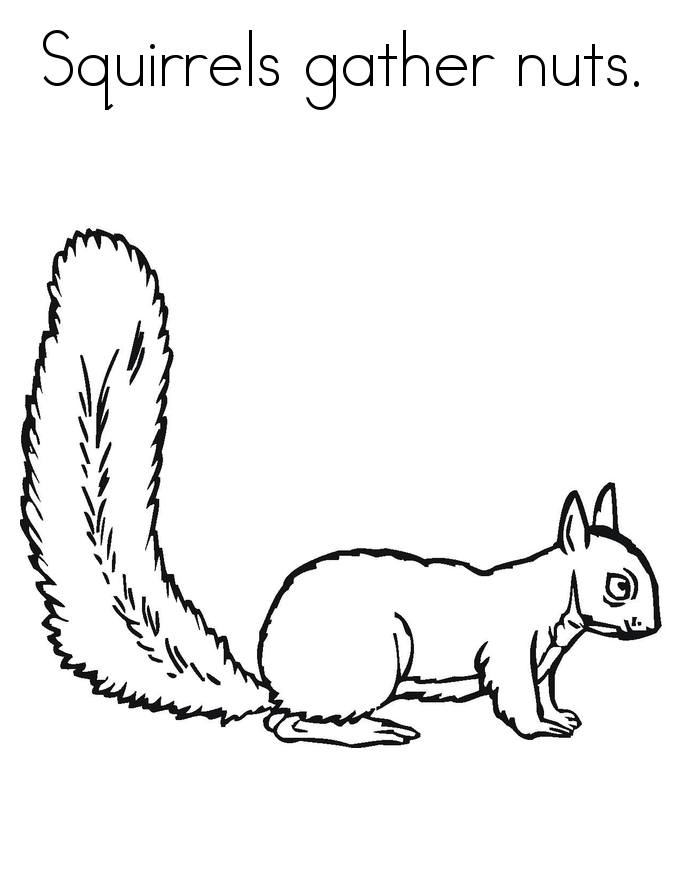 Free Printable Squirrel Coloring Pages For Kids Squirrel