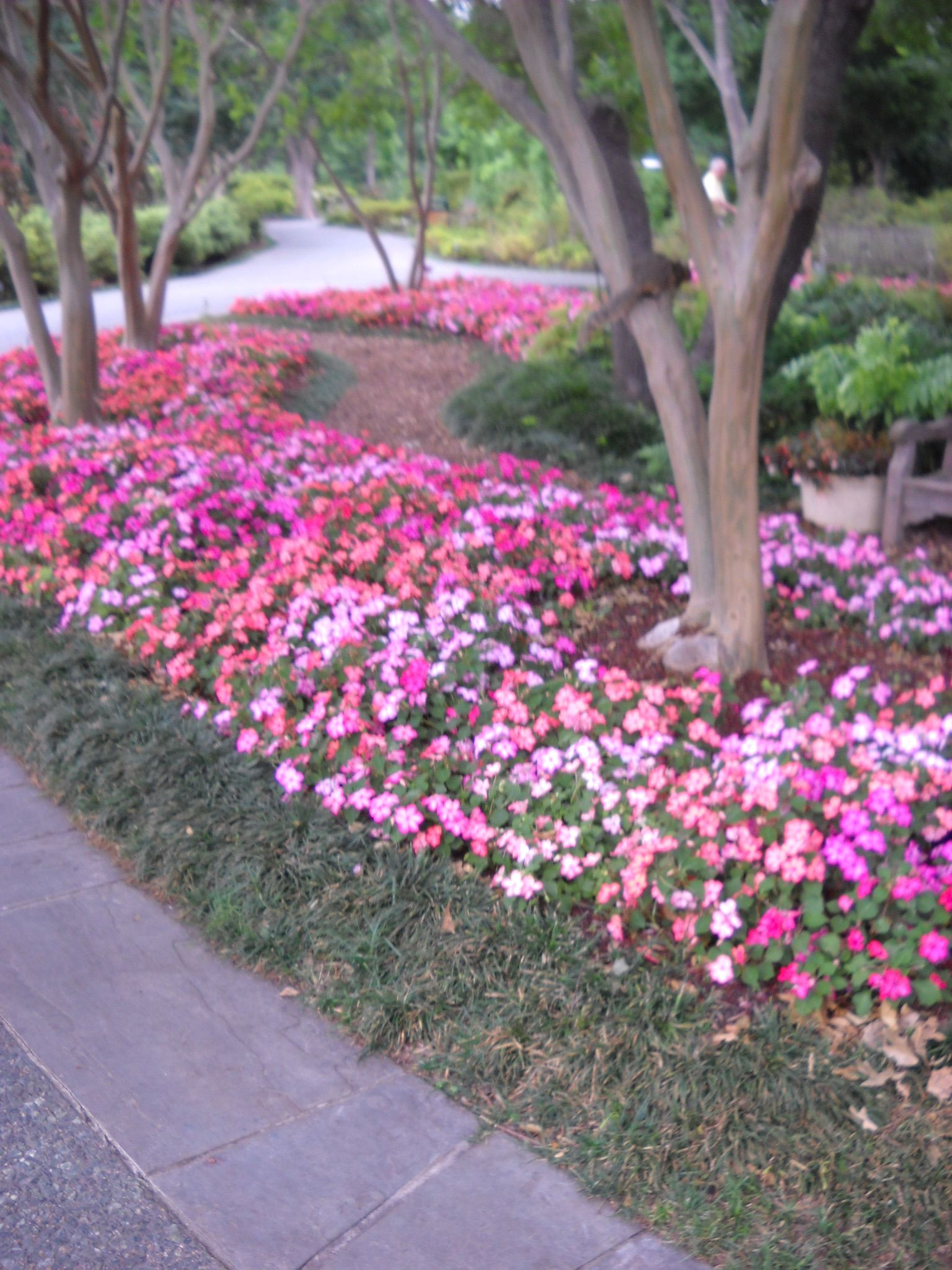 Dallas Gardens (With images) | Southern garden, Plants, Garden