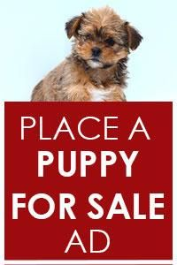 place a puppy for sale ad german shepherd pinterest pocket