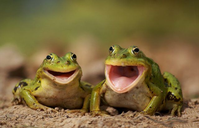 """""""Hey...didja hear the one about the frog and the snail crossing the road...?"""