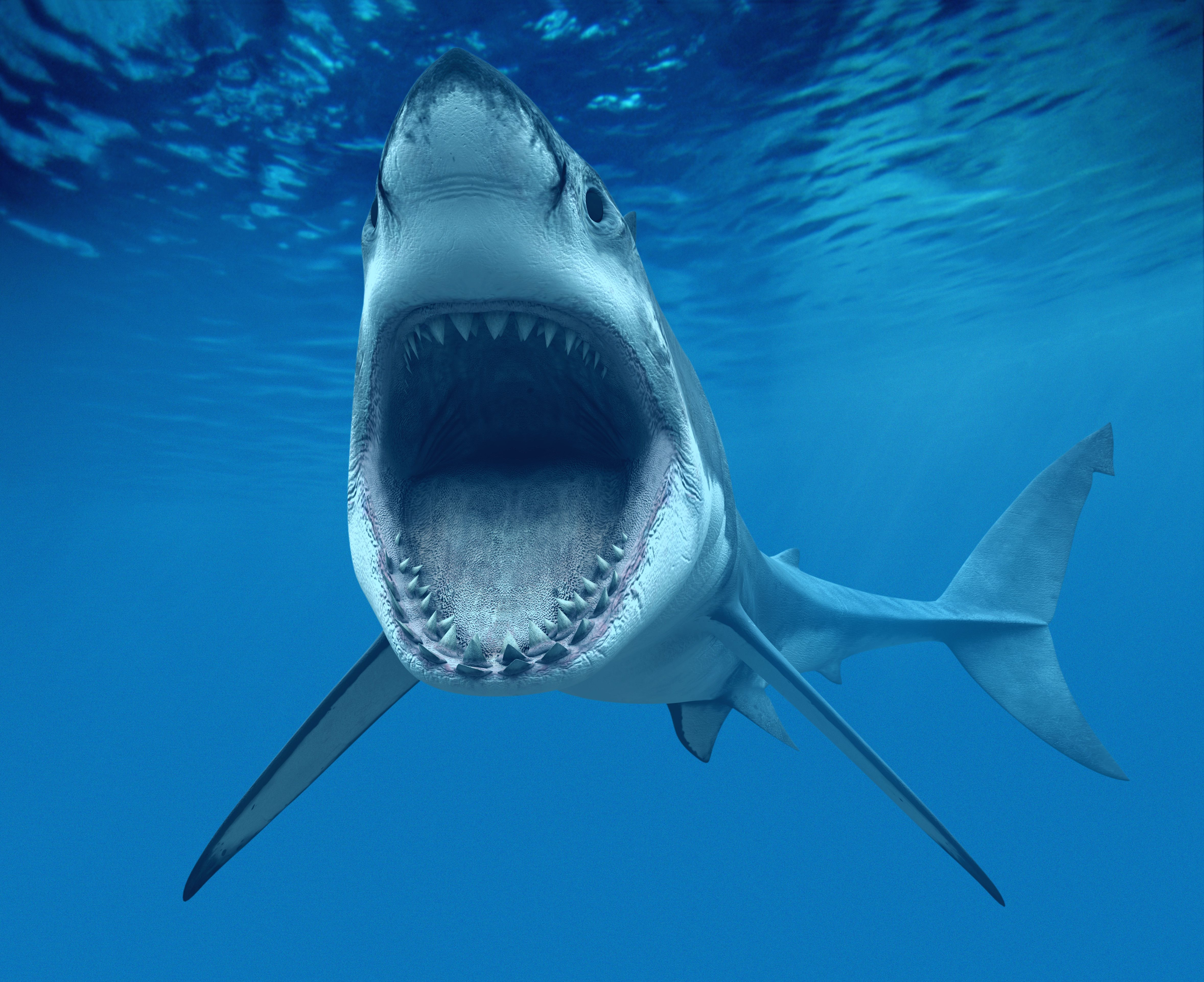 shark attack myths and facts debunked shark animal and ocean