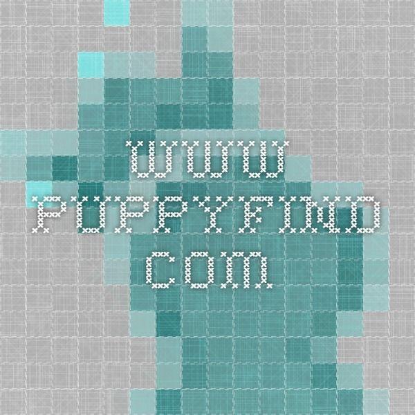 www.puppyfind.com