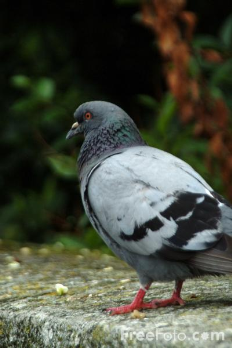 Get rid of pigeons by making roosting and nesting areas