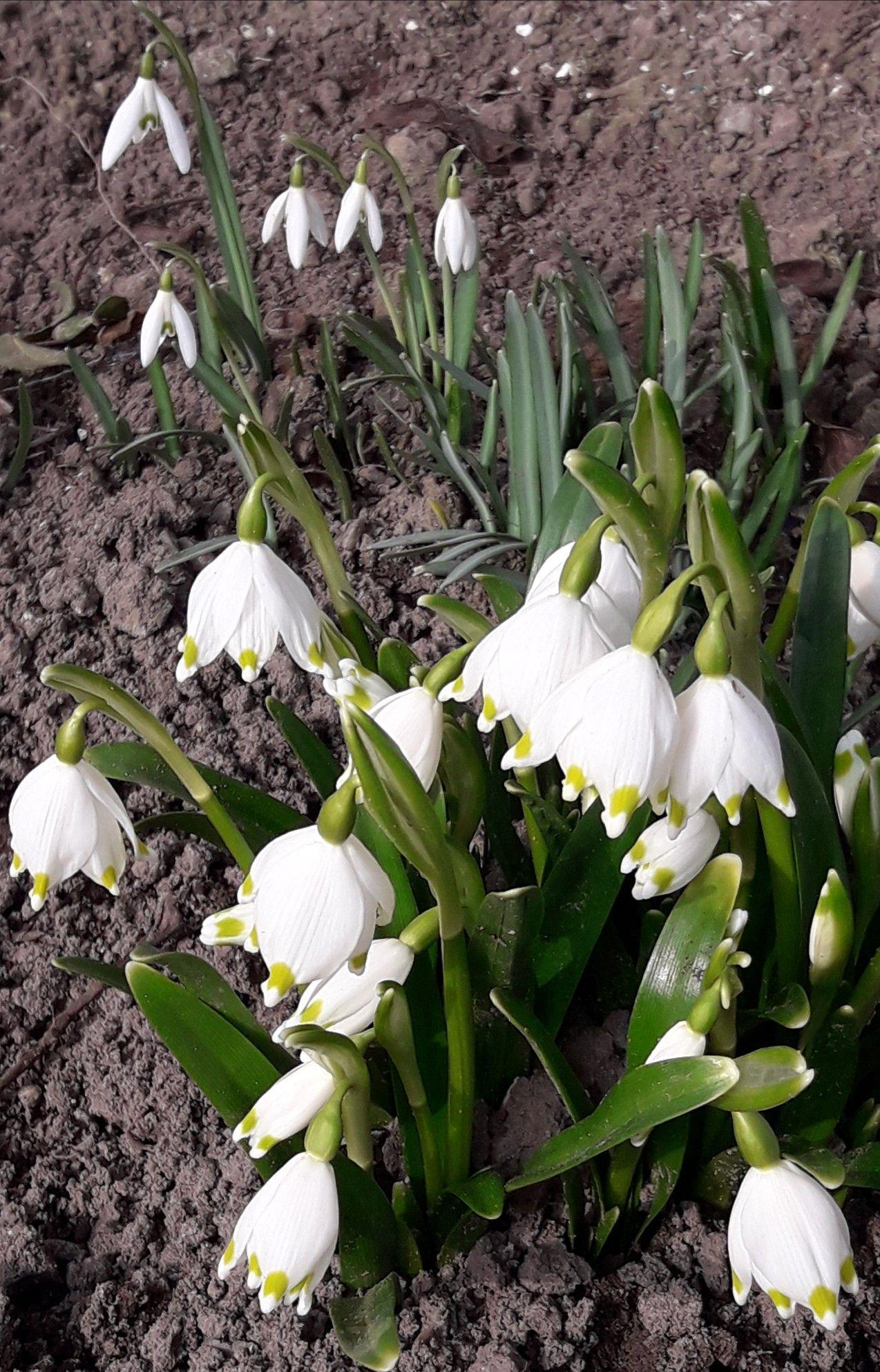 Wiosenne Kwiatki Plants