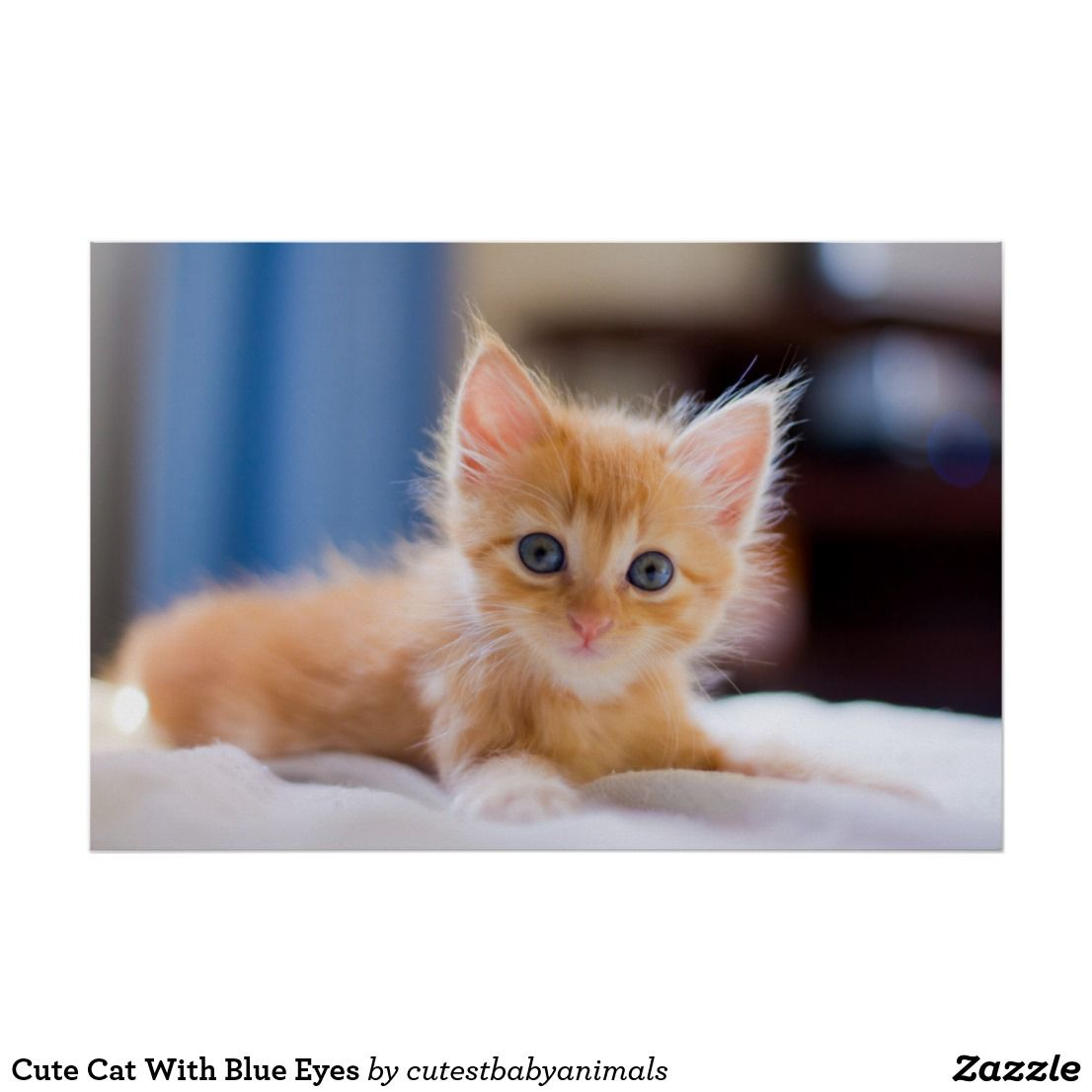 Cute Cat With Blue Eyes Poster Zazzle Com Cat With Blue Eyes Kittens Cutest Cute Cat