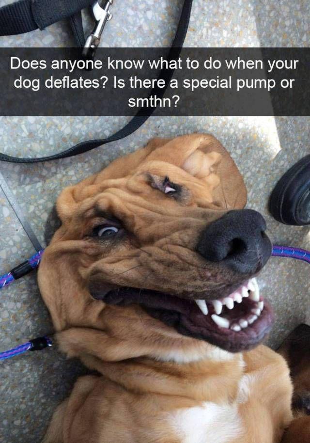 50 Funny Dog Snapchat Selfie Captions 2017 Funny Dogs Funny Dog