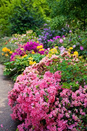 plantas coloridas e flores
