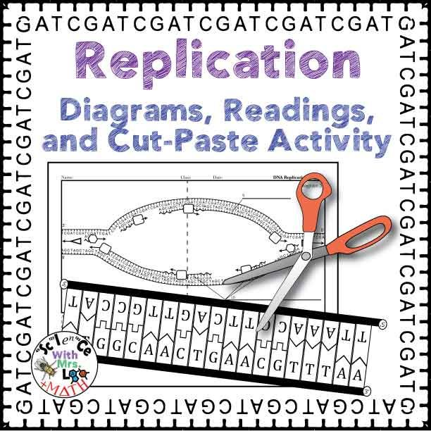 Dna replication activity diagram and reading for high school dna replication diagrams readings and cut and paste activity packet from science and math with mrs lau ccuart Images