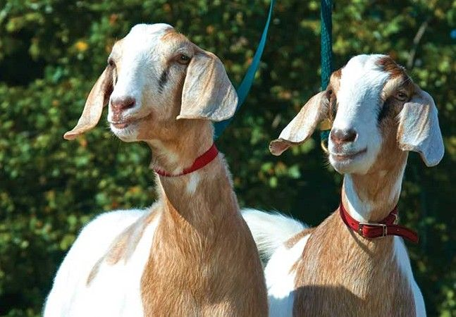 Talk Of The Towns 3 23 16 Humane Society Animals Pet Adoption