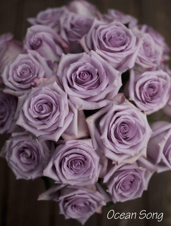 The Lavender Purple Rose Study Purple Roses Purple Wedding Flowers Lavender Roses