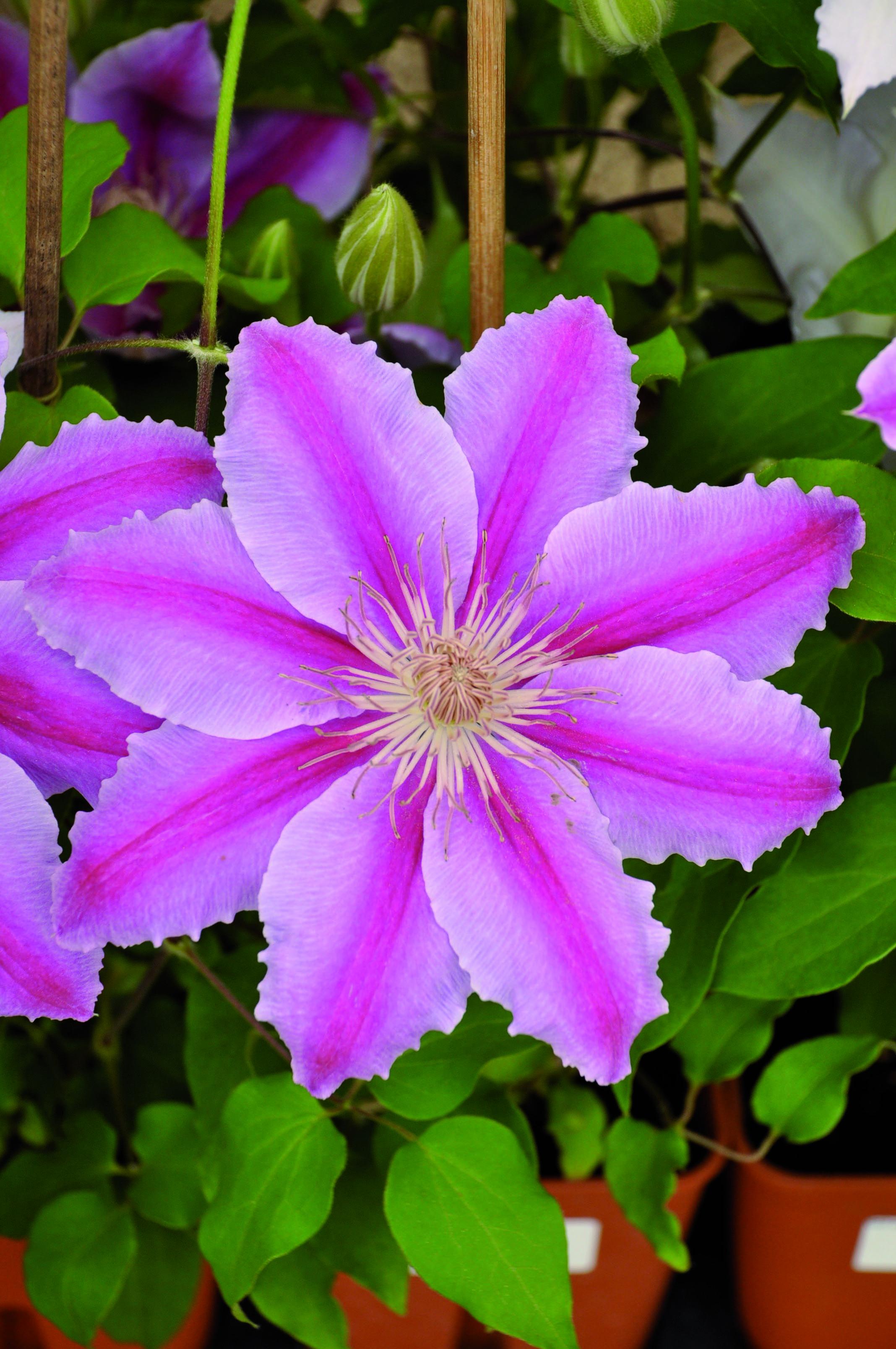 Garden Center E Il Tuo Centro Giardinaggio Di Fiducia Con
