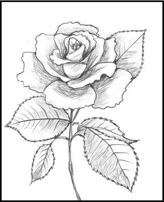 Pin de Roberto Gando en Flores | Pinterest | Rosas, Dibujo y Dibujos ...