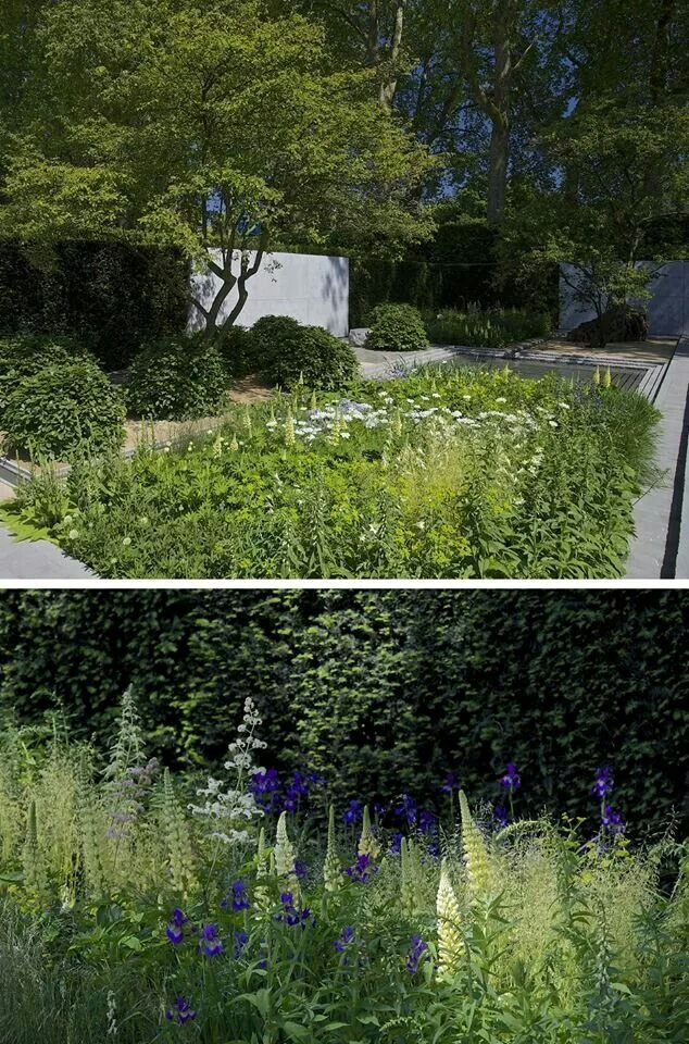 Laurent-Perrier Garden, RHS Chelsea 2014. Love the lupins ...