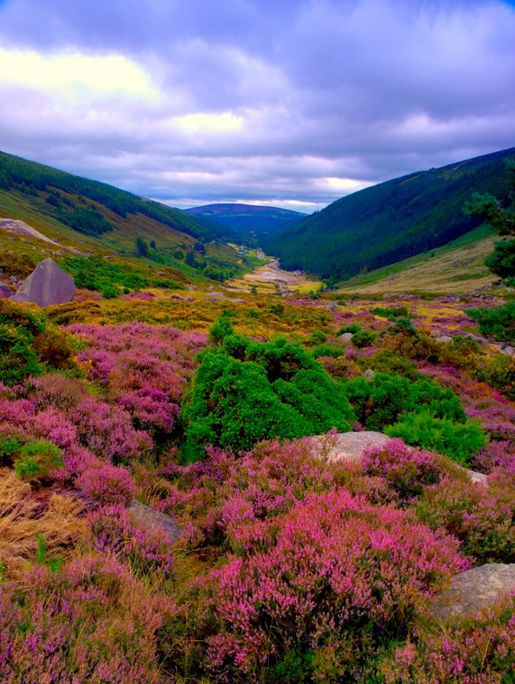 View from Sally Gap, County Wicklow. Seems as if all colors reside here in this Gap...Beautiful!