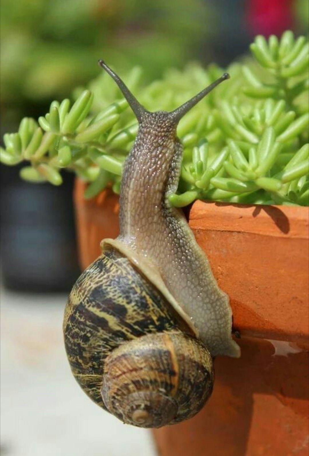 Escargot | Snails in garden, Pet snails