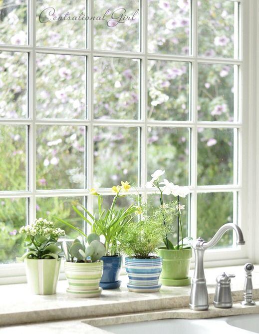 pretty little plants in the kitchen