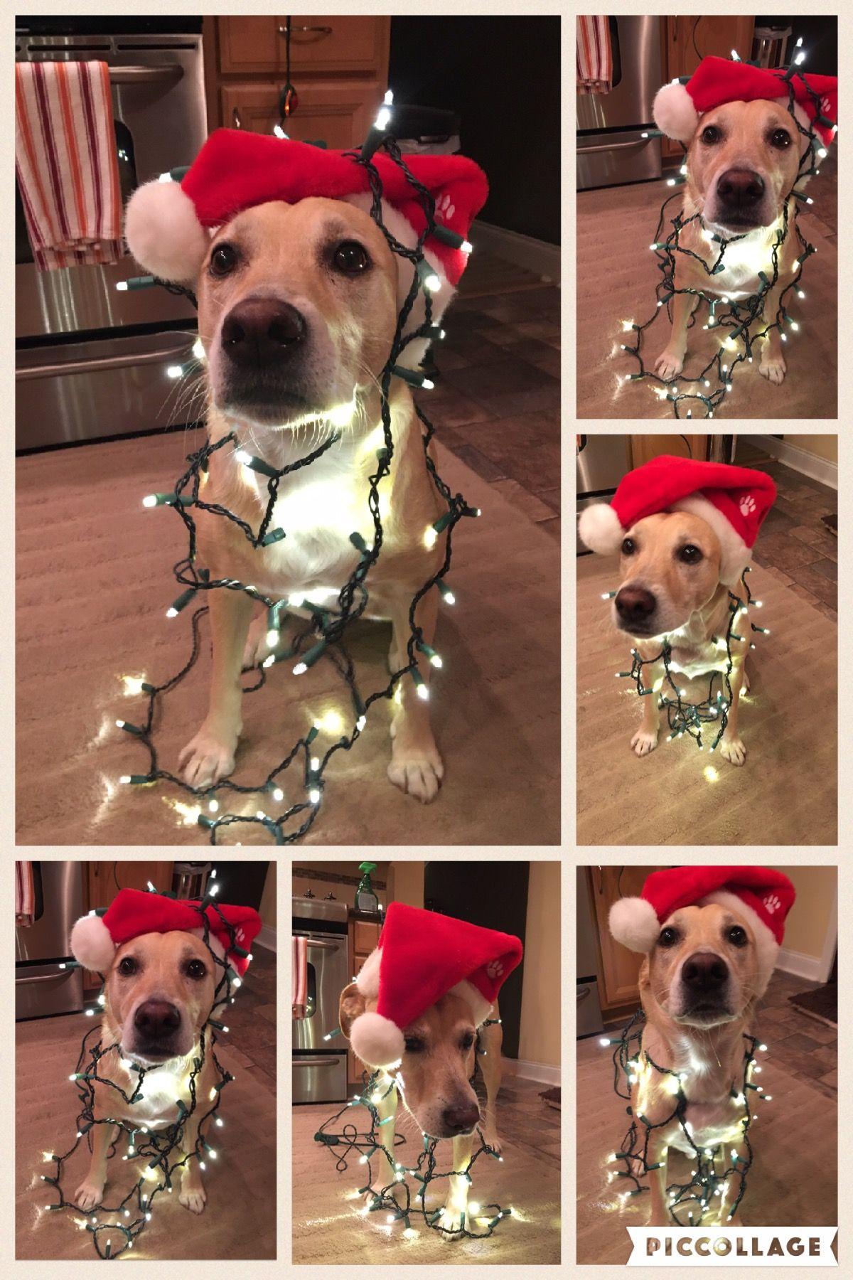Christmas 2016 Ace