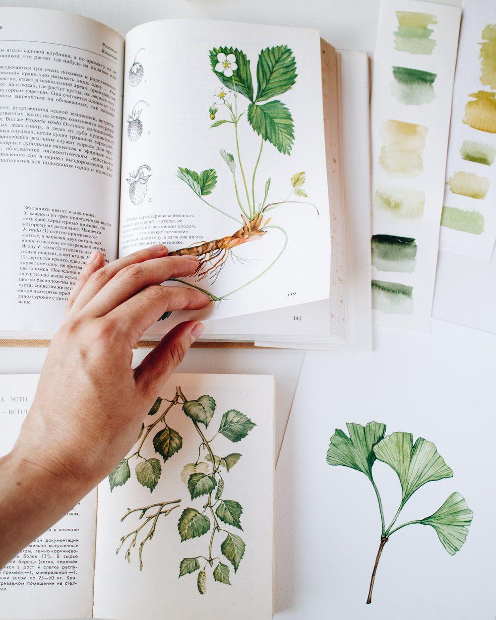 Botany Books Botany Illustration Botanical Illustration Botany Books