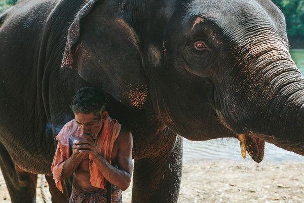 Elephant in Kerala, India