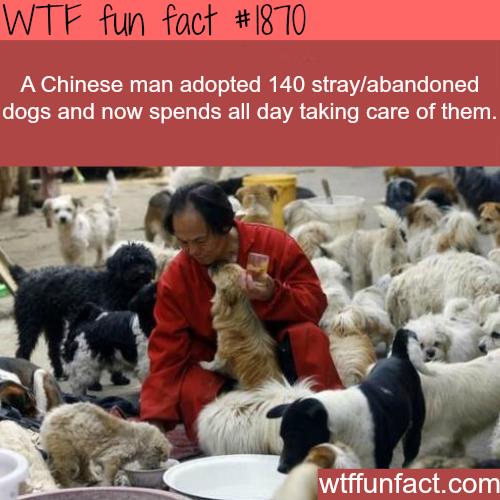 Stray animals statistics - photo#40