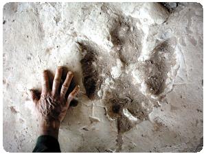 Paleontológicas | Portal Académico del CCH