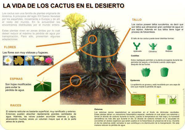 Cactus interpretaci n ambiental buscar con google for Informacion sobre el cactus