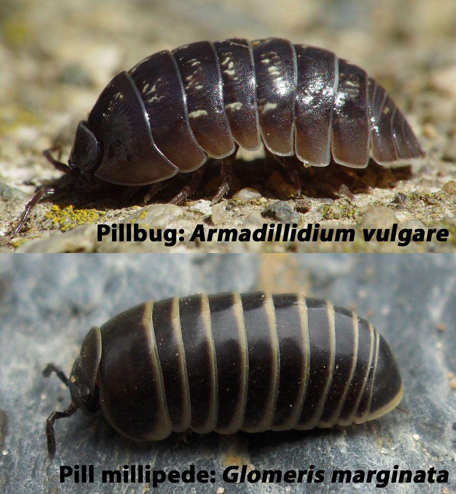 Animali diversi, stesso percorso evolutivo