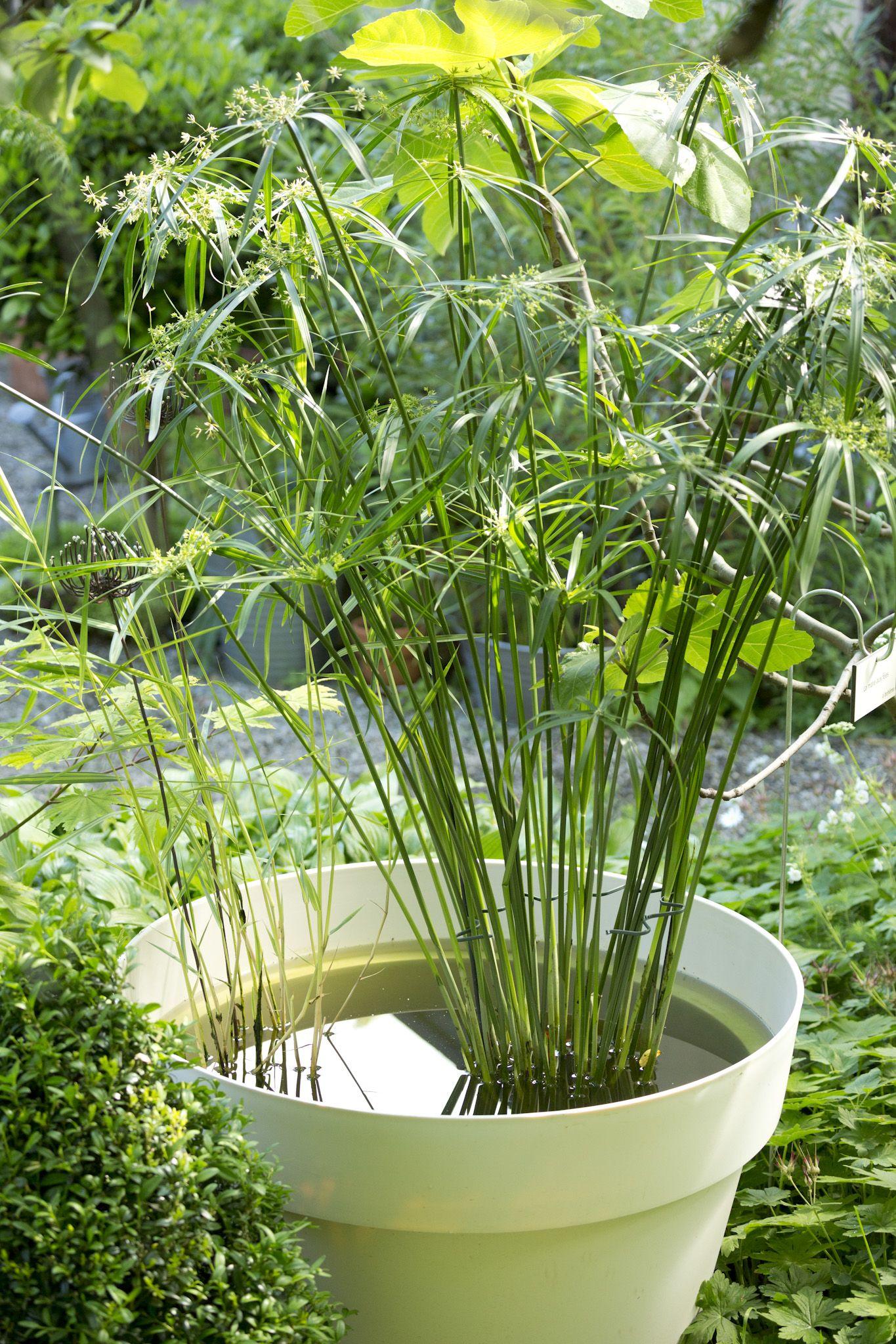 Un Point D Eau Apporte Fraicheur Et Biodiversite A Votre Jardin