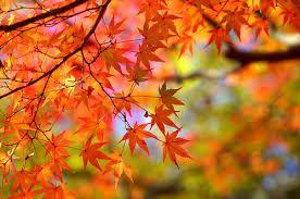 autumn botanical - Google 検索