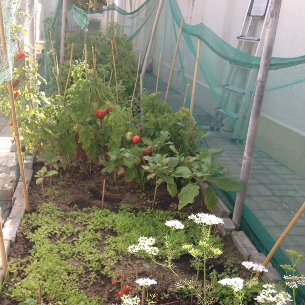 Grow your own food! Upload your city's errors and solutions on cityoferrors.com