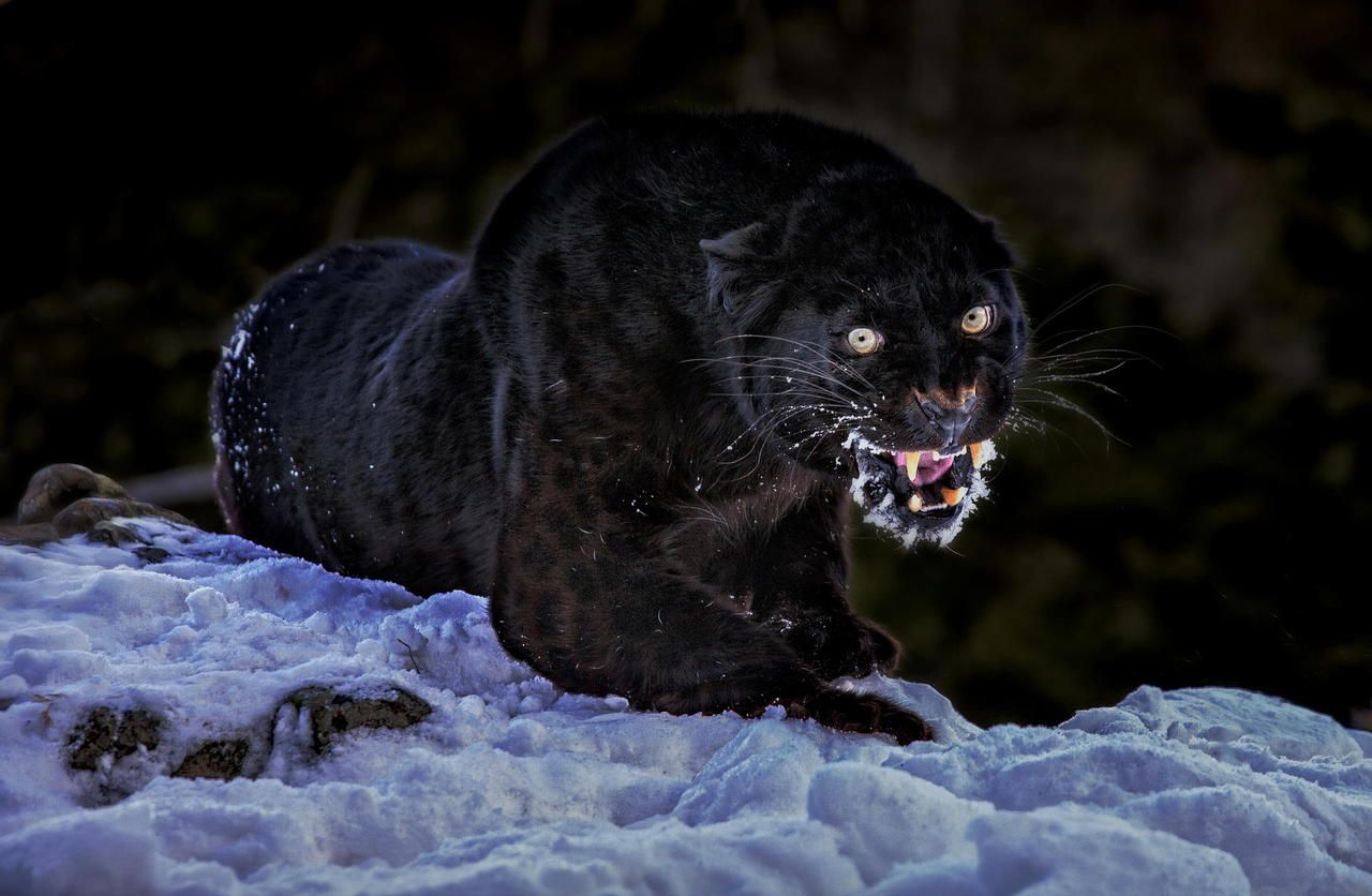 (via 500px / You are too near... by Paul Keates)