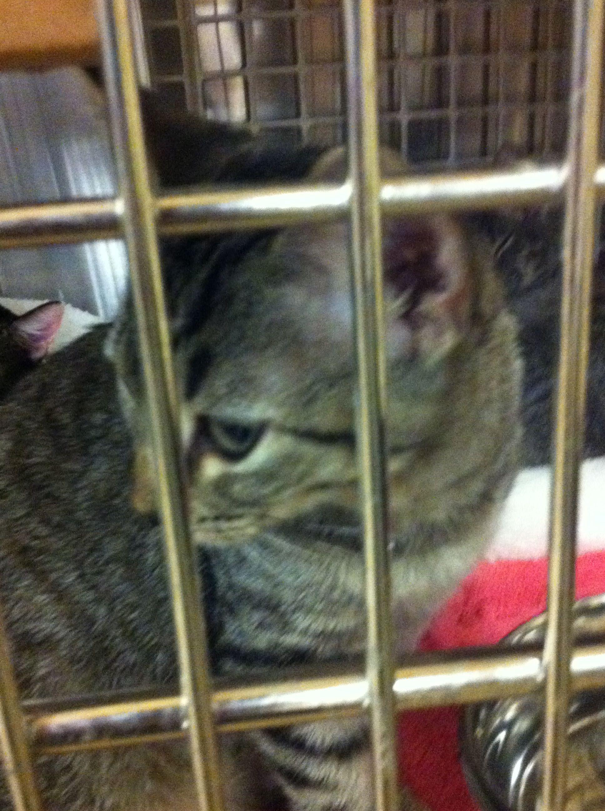 07/24 adopt a kitty thru pet smart