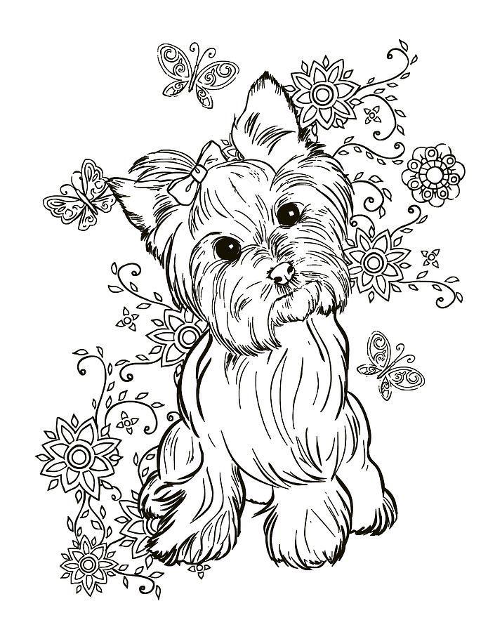 Yorkie Terrier By Cindy Elsharouni In 2021 Animal Coloring Pages Dog Coloring Page Puppy Coloring Pages