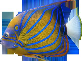 Med Fish Close Png 325 242 Fish Creatures