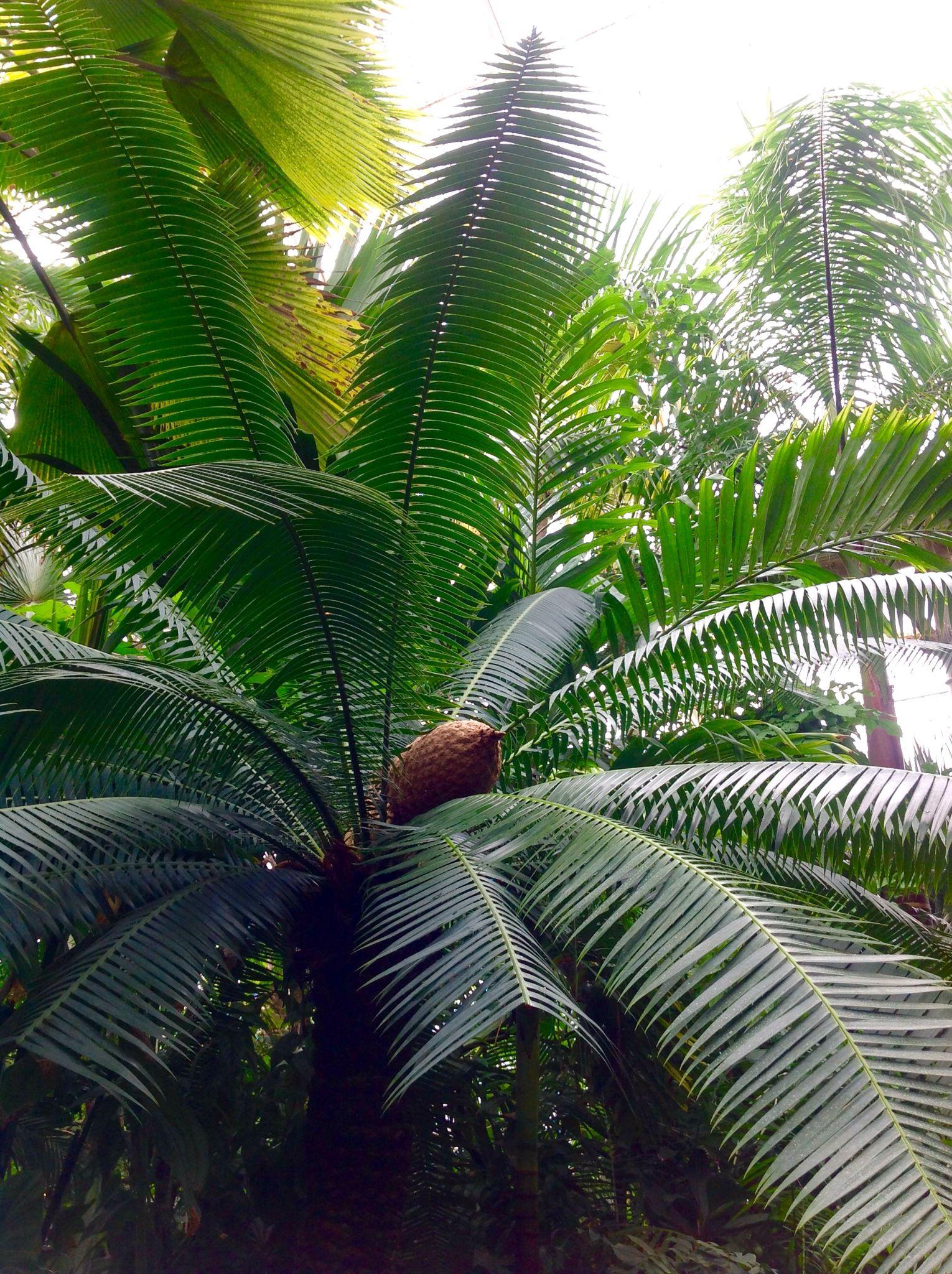 palm house kew gardens botanical garden pinterest gardens