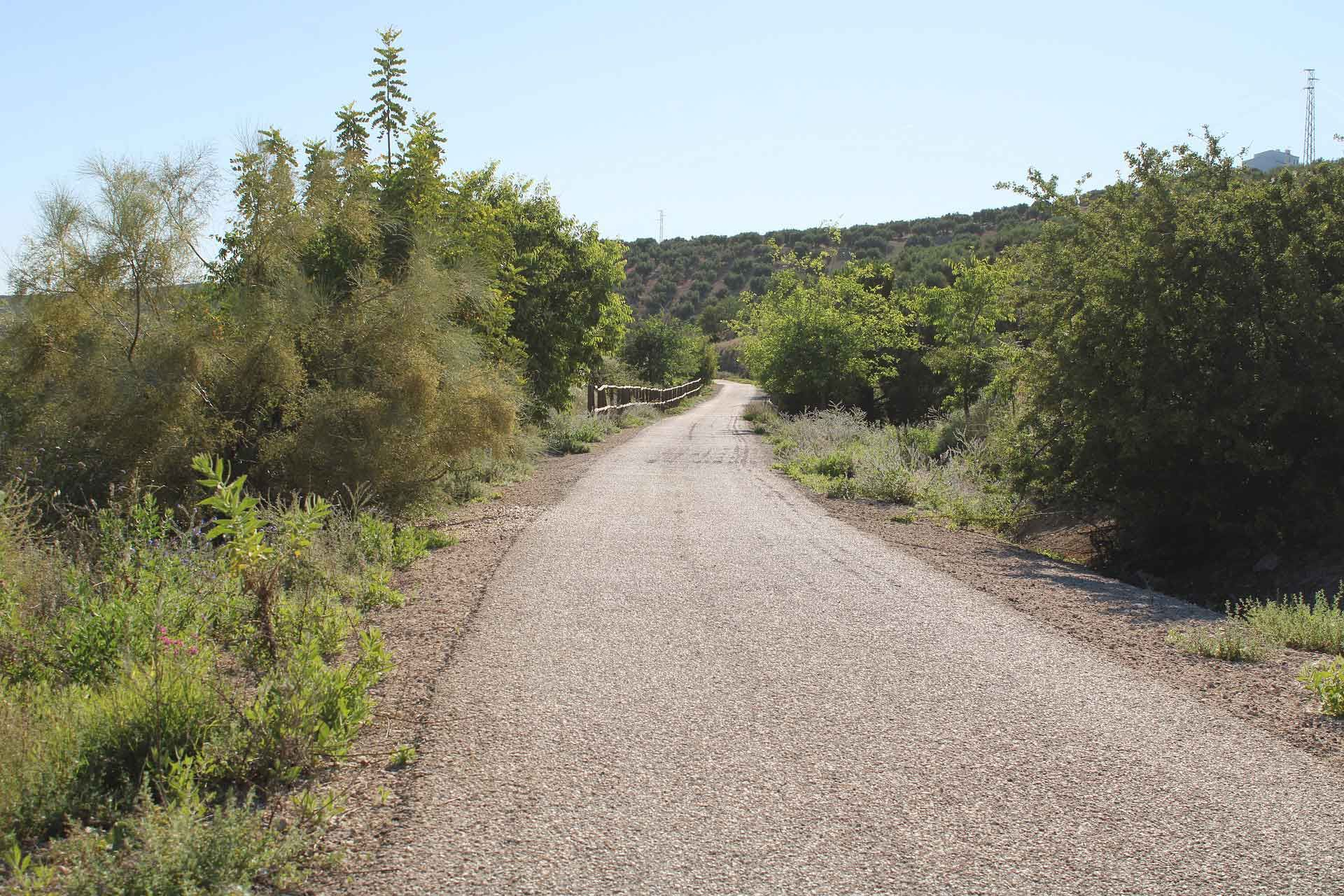 paisajes a lo largo de la ruta en direccion a la vecina localida de Torredonjimeno